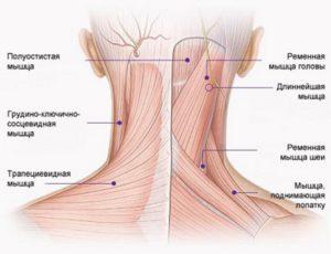 болит шея справа слева сбоку и плечи с правой с левой стороны